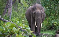 The huge mammal – Corbett National Park