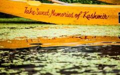 Rowing at Kashmir Dal Lake